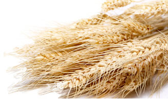 Wheat Sheath